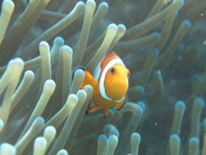 coral garden diving menjangan