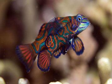 diving bali fish