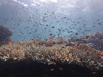 menjangan coral garden