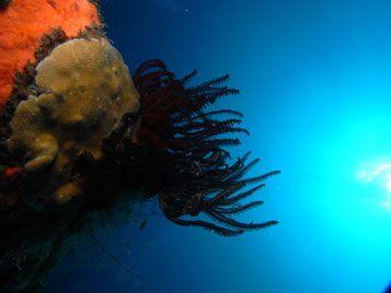 menjangan diving