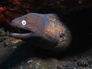 eel spotted