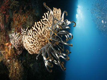 underwater world diving